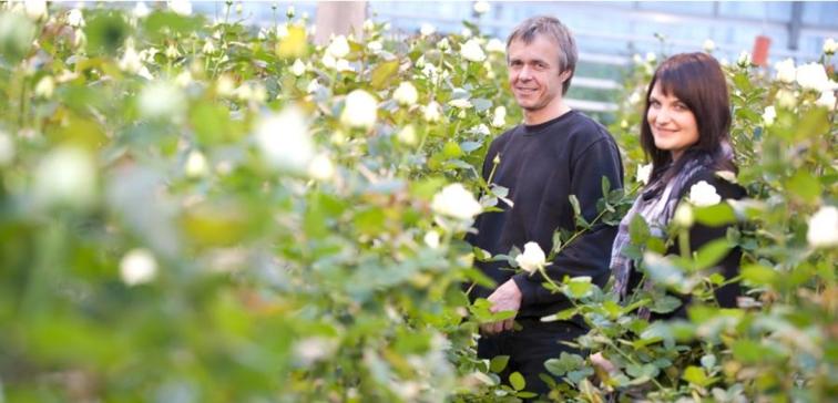 ihr blumengesch ft in graz umgebung rosen aus eigener produktion. Black Bedroom Furniture Sets. Home Design Ideas